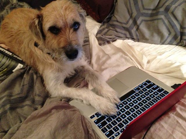 Seamus — the mutt I adopted from Nicole, the RR100 champ — accompanied me as I followed the race online.